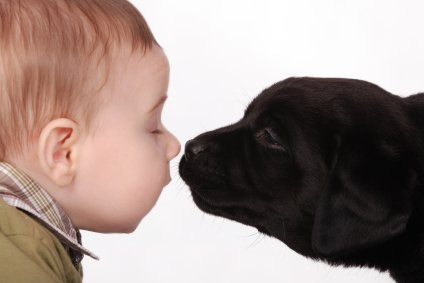 baby and pet puppy dog check each other out